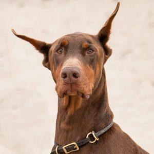 Dog Training South Shore